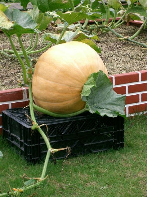 List of gourds and squashes - Wikipedia