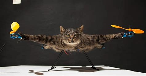 Remote-controlled cat-copter takes to the sky - CatTime