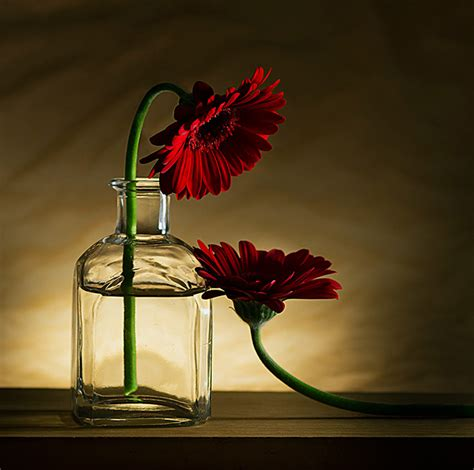 30 Stunning Examples of Still Life Photography