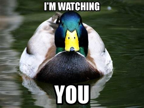 Anatidaephobia - Fear of being watched by a duck