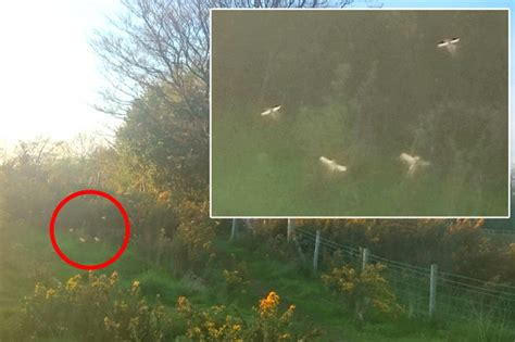 Fairies caught on camera in British countryside   Daily Star