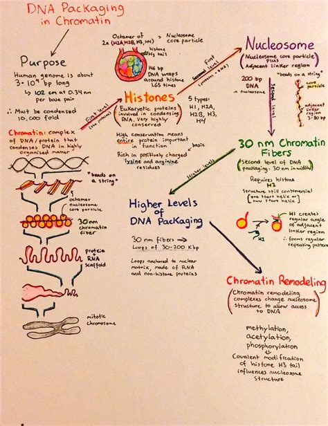 Introductory Biochemistry Flowcharts – Love, Life and